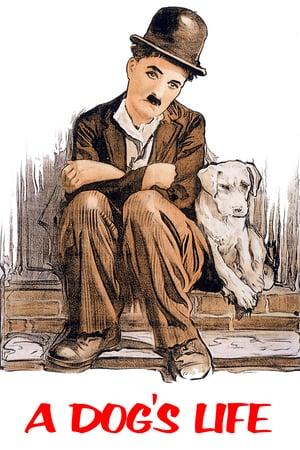 Bir Köpeğin Hayatı